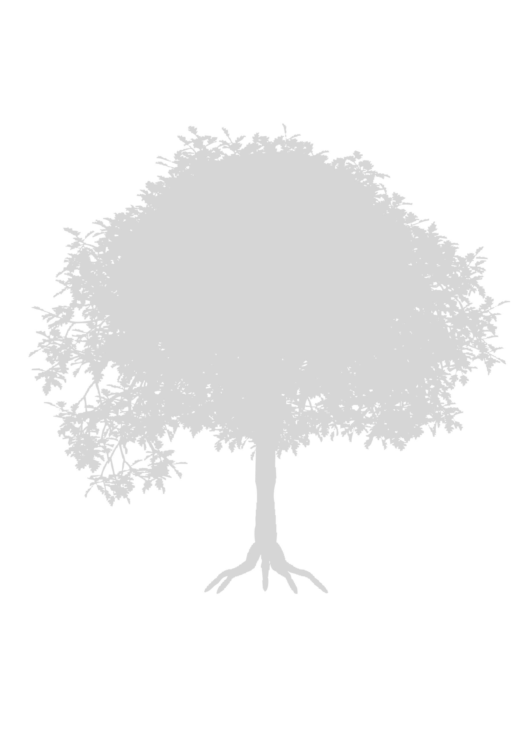 drzewo-szablon-do-druku-3