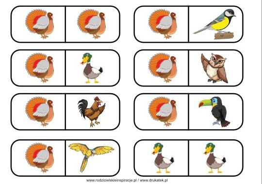 Ptaki domino do druku