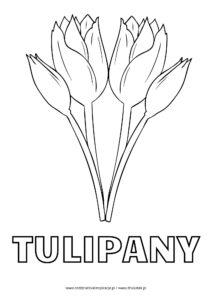 Tulipan - kolorowanka do druku