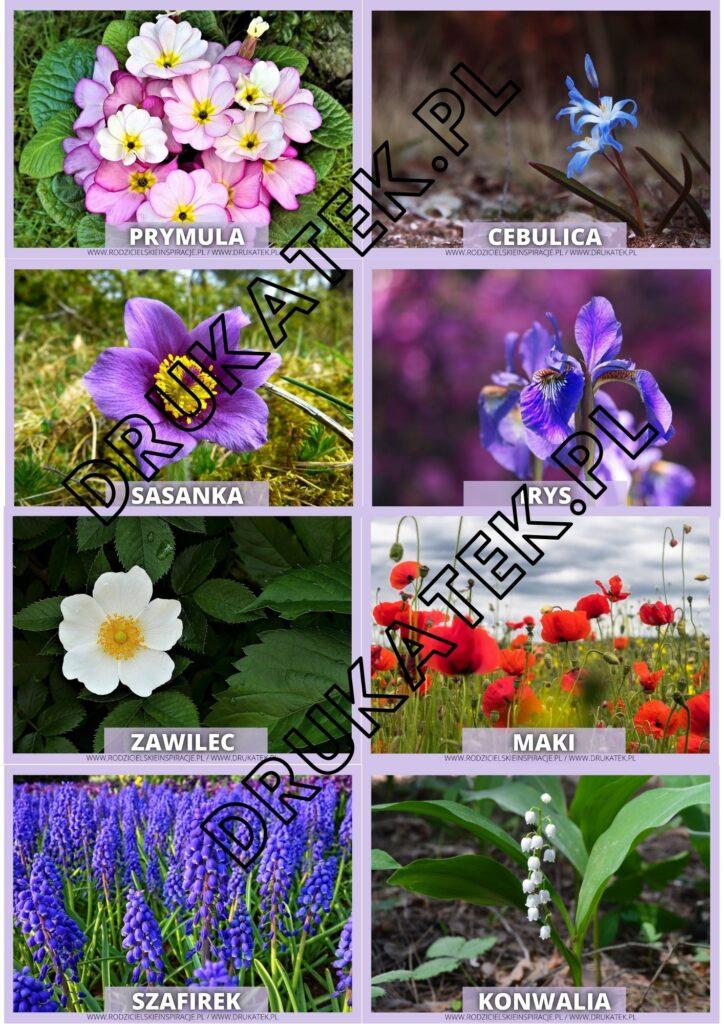 wiosna-karty-pokazowe