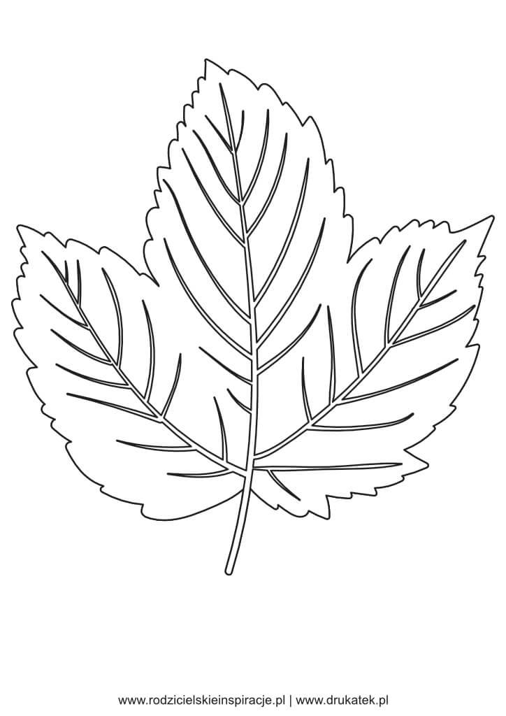 lisc kolorowanka