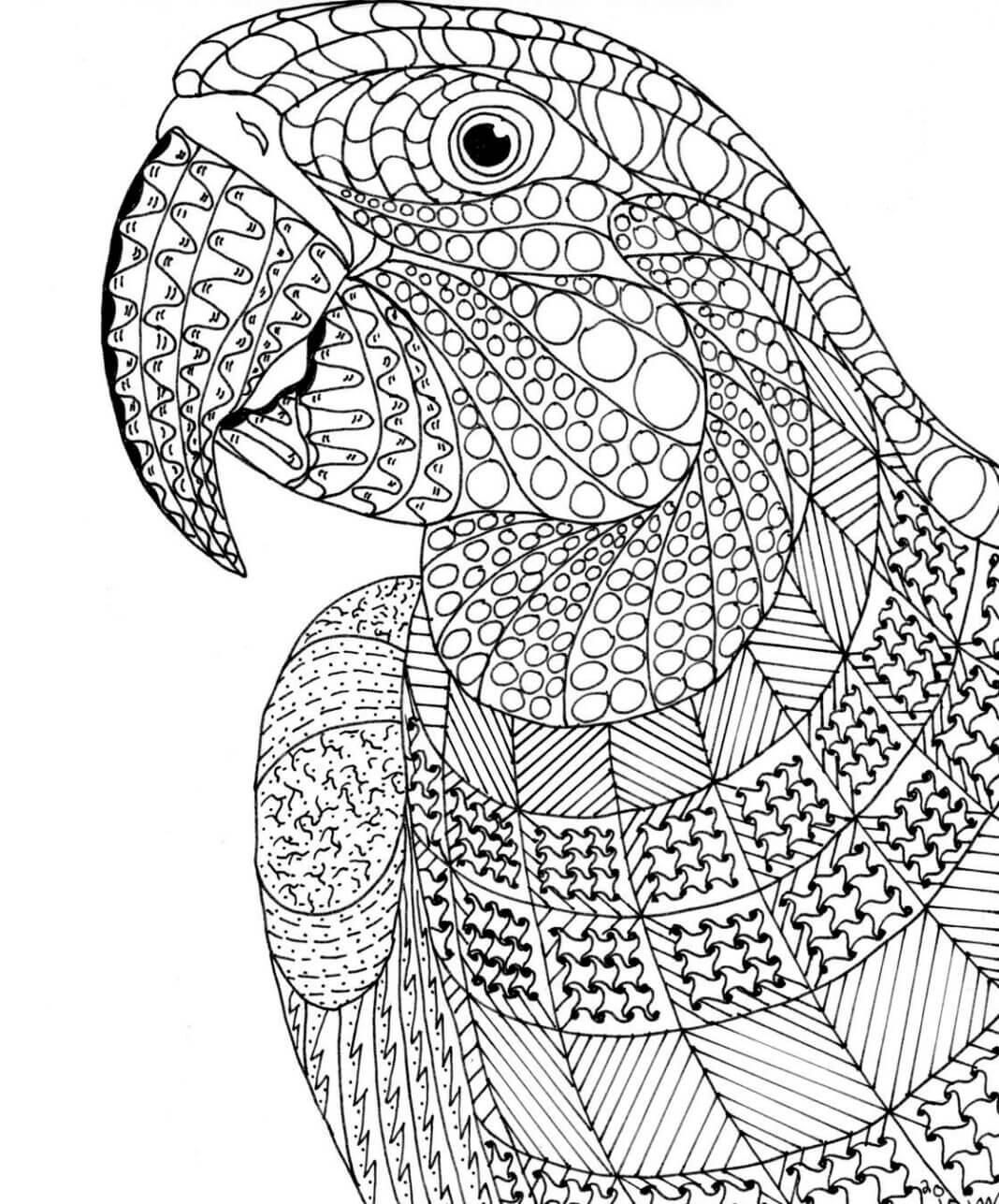 papuga kolorowanka